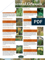 Grasses Catalog
