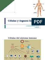 Células y Órganos Linfoides
