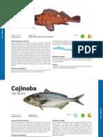 Especies Marinas Norte de Chile