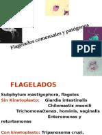 Flagelados comensales.pptx