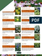 Perennials Catalog
