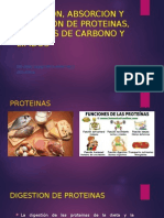 Digestion, Absorcion y Excresion de Pt-,Lip y Ch