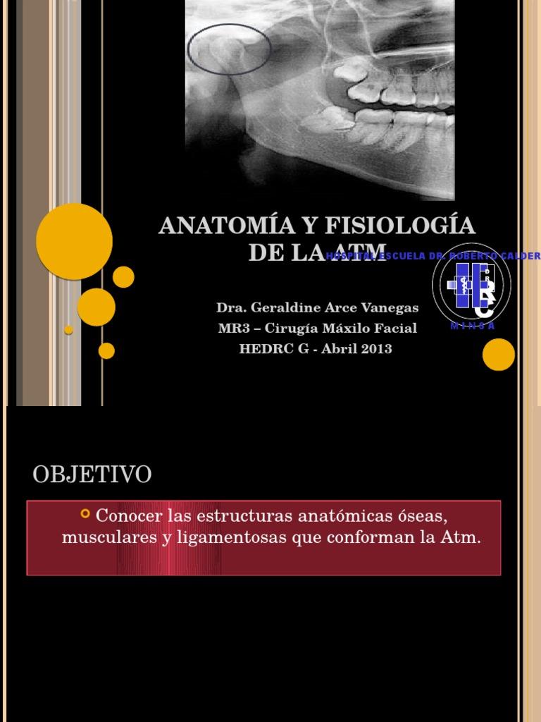 Anatomia y Fisiologia de La Atm