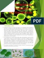 atlas Cianobacterias, Bacillarophytas y Euglenophytas.pptx