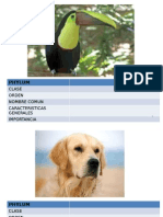Reconocimiento Animales 2