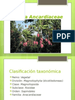 Ancardiaceae modificado
