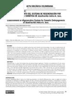 Establecimiento Del Sistema de Regeneracion Por Embriogenesis Somatica