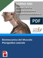 biomeccanica-pterigoideo-laterale