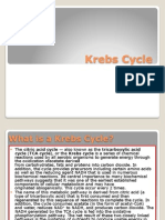 Krebs Cycle