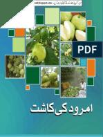 Amrood K K (Iqbalkalmati.blogspot.com)