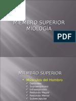52731018 Expo Anatomia Miembros Miologia 1213321719674969 8 PPTshare