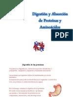 Enzimas de La Sigeston de Proteinas (1)