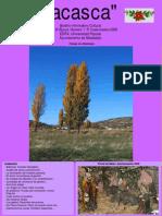 ACASCA 2009. 3.pdf