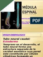 7 Clase Medula Espinal y Meninges