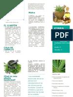 plantas medicinales - kyara