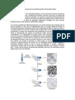 Actividad Especifica B-Galactosidasa