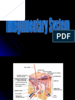 Basic Structures of the Integumentary System