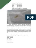 Identifikasi Insektisida Walang Sangit Kelompok 5