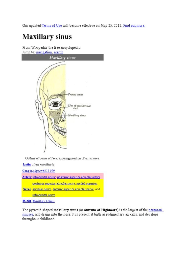 Maxillary Sinusitis   Human Head And Neck   Human Anatomy