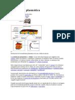 Membrana Plasmática MOLECULAR
