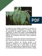 Plantas Tercero