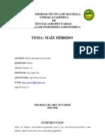 Maiz Hibrido-Aex Cruz