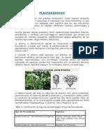 PLANTAS MONOICAS
