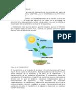 QUÉ ES LA FOTOSÍNTESIS.docx