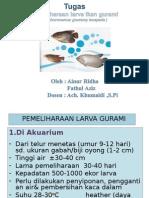 Pemeliharaan Larva Gurami (Ainur Ridho)
