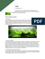 Algae Analiza