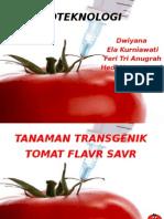 Tomat Flavr Savr
