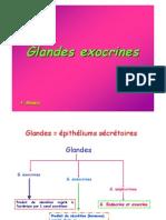 Glandes_Exocrines