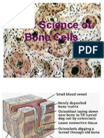 Basic Science of Bone Cells