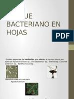 Ataque Bacteriano en Hojas