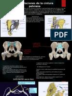 Anatomia Ligamentosa