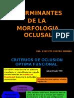 1.Determinantes de La Morfología Oclusal