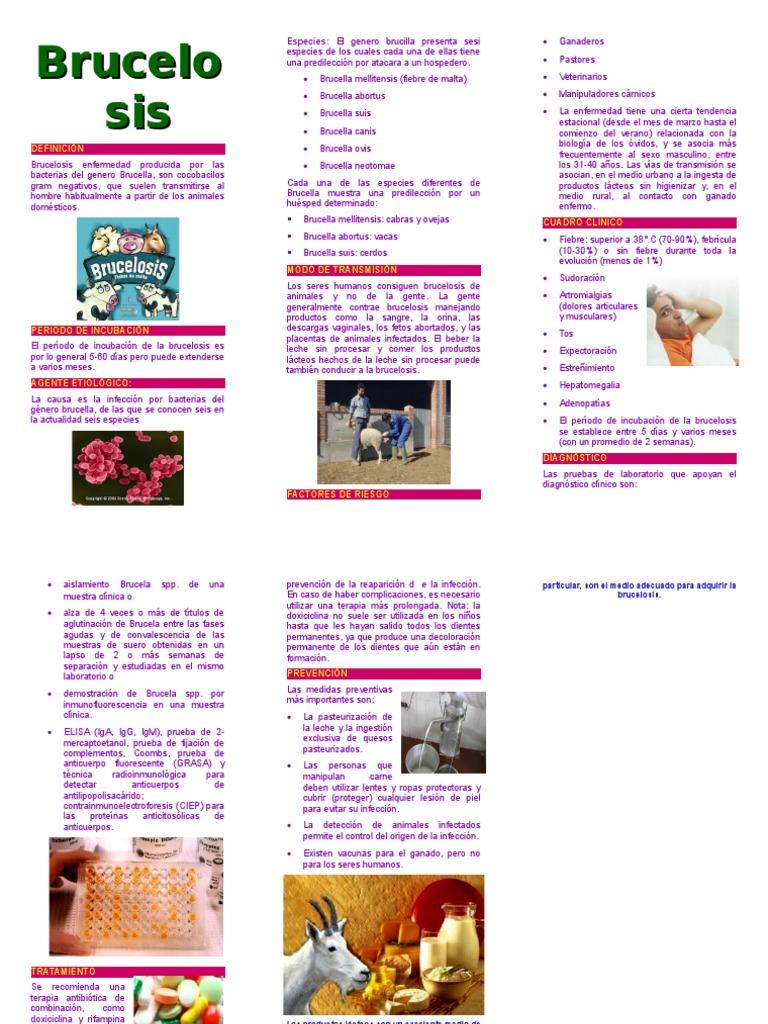 Triptico Brucelosis Agente Periodo Transmision Ciencias De La Salud Bienestar