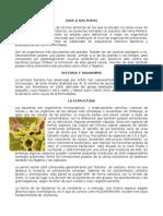 Documento Acerca de Bacterias