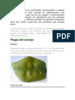 Enfermedades y plagas del naranjo.docx