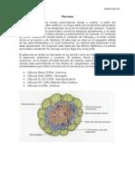 Patologia Endocrino