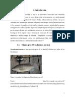 Protocolo de Parasitos en Tilapia (Terminado) (2)