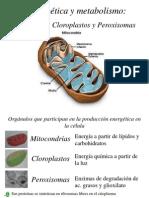 Mitocondria.150491763