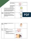 Embryology (Generalized)