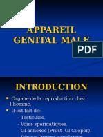Appareil Genital