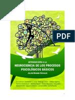 Introduccion A Neurociencia De Procesos Psicologicos Basicos