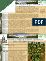 150 Tabaco.pdf
