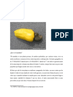 Estudio agroindustria del marraron en Cesar-Colombia