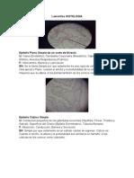 laminillas histologia.docx