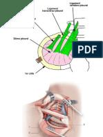Dome Pleural