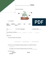 Examen Las Partes de Una Planta